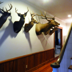 South Carolina, Hunting,Cypress Creek Hunting Lodge